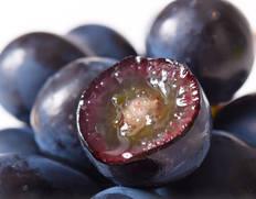 皮ごと食べられる種無しブドウ「ナガノパープル」