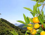 愛媛県中島産 農音みかん 約3kg(目安27〜33玉) S〜Lサイズ 常温 産地直送