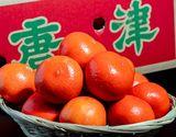 佐賀県産 新柑橘 みはや 約2.5kg M〜2Sサイズ  ※常温