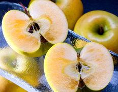 あの蜜入り黄リンゴ「こうこう」が訳あり特価!
