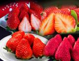 『いちご福袋』 4品種 合計約1キロ 新品種「いちごさん」&「あまおう」&「スカイベリー」&「きらぴ香」