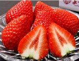 イグナルファーム佐藤さんがつくる 大粒 「よつぼし」約450g 化粧箱 ※冷蔵