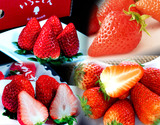 『いちご福袋』 4品種 第2弾 合計約1キロ 新品種「いちごさん」&「ゆめのか」&「ひのしずく」&「紅ほっぺ」