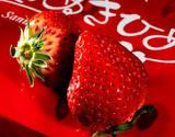 『さぬきひめ』 香川県産 12〜18粒入 約400g 化粧箱 ※冷蔵