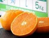 「訳ありせとか」外なり 約5kg 愛媛県中島 S〜3Lサイズ 常温