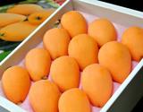 『長崎びわ』長崎県産 ハウス栽培 L〜2L 約500g 化粧箱 ※常温