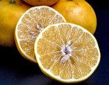 安田さんの『完熟グレープフルーツ』熊本県産 約3kg(8〜12玉)化粧箱 ※常温