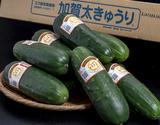 加賀野菜『加賀太きゅうり』 石川県産 約3kg(9〜10本) ※冷蔵