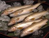 四万十川 天然鮎 (竿漁 活け〆) 約1kg(5〜10尾程度)高知県産 ※冷凍