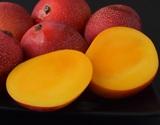 【朝日マリオン】『完熟ミニマンゴー』沖縄県産 S〜3Sサイズ 約500g(3〜12玉)×2パック ※常温