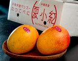 『夏小紅(なつこべに)』沖縄県産マンゴー 約900g(2〜3玉)