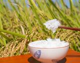 新品種「葉月みのり」令和元年度 新米 新潟県産 白米 5kg ※常温